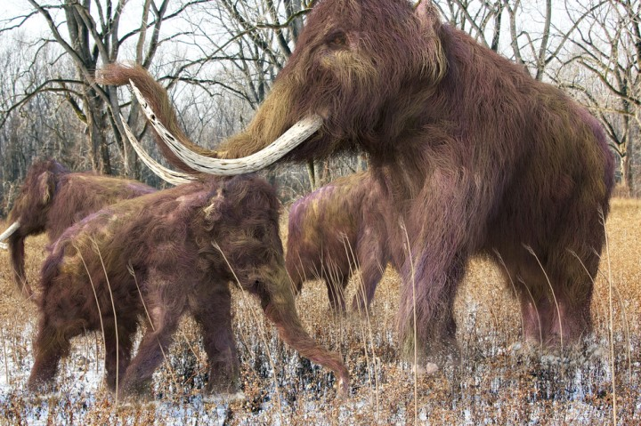 A Pleistocene Vision of the Past Offers Direction for the Future
