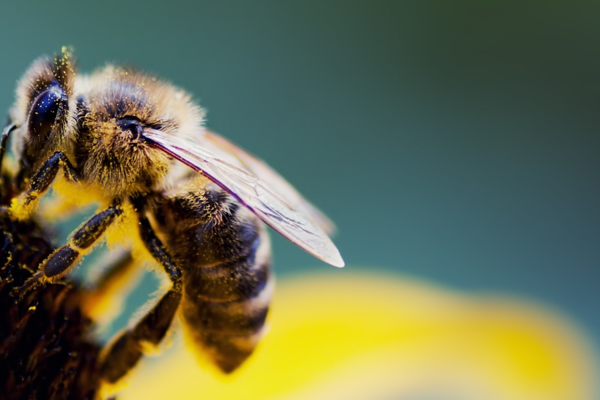 3 Simple Ways to Help Bees