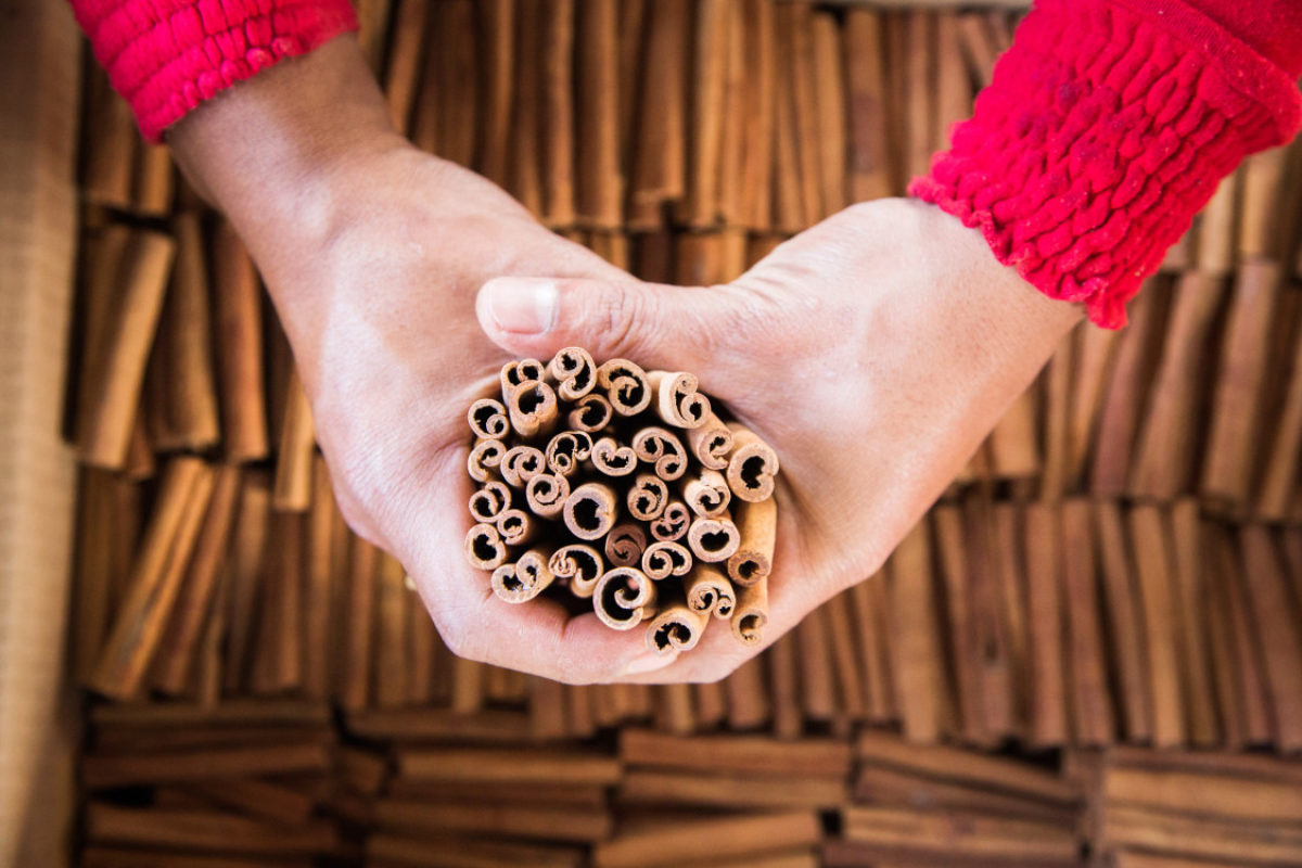Ceylon vs Cassia : 9 Important Things You Need to Know about Cinnamon