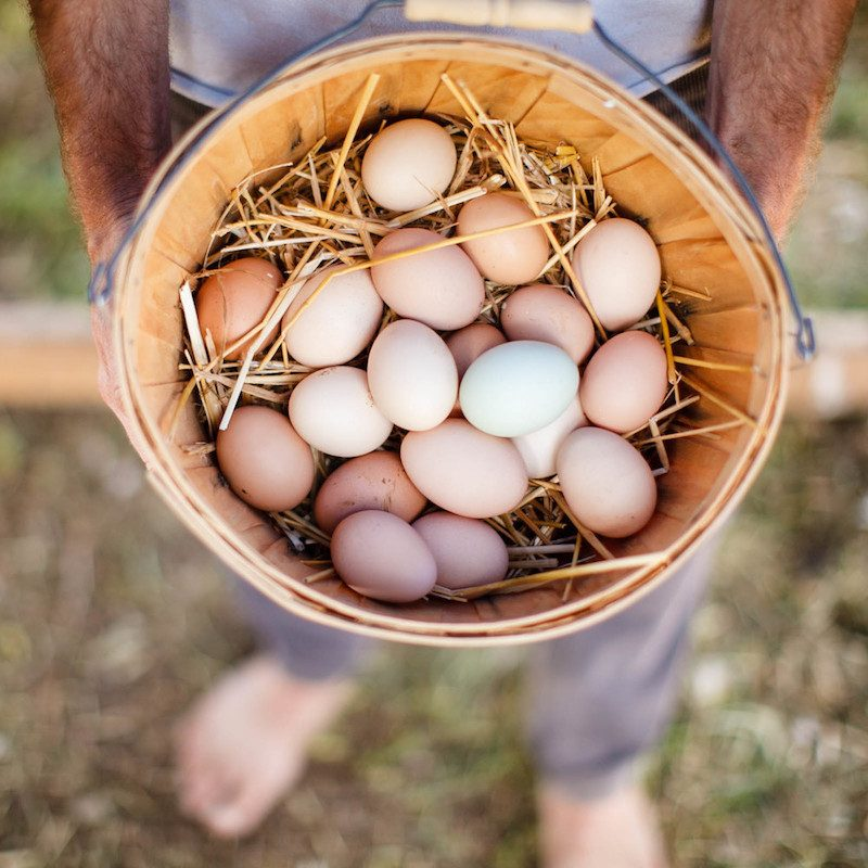 Egg Basket - Primal Pastures - Paleo Approved - Paleo Foundation