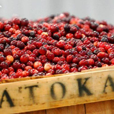 Atoka Certified Paleo Cranberries Canada