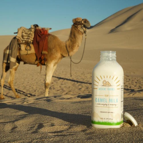 Camel Milk + Camel in desert - Desert Farms - Paleo Approved - Paleo Foundation