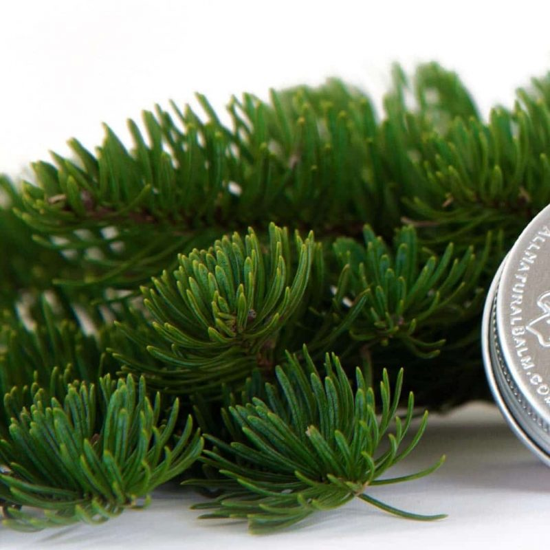 Cedar & Fir Butter Balm - Balm of Gilead - What goes on our skin CAN penetrate into our bloodstream. While not everything can penetrate, many things certainly do! And as our society has become increasingly aware of harmful, and often unnecessary, chemicals, additives, and preservatives, both in diet and in body care, Balm of Gilead has emerged as a safe and effective brand of skin care. #certifiedpaleo #paleo