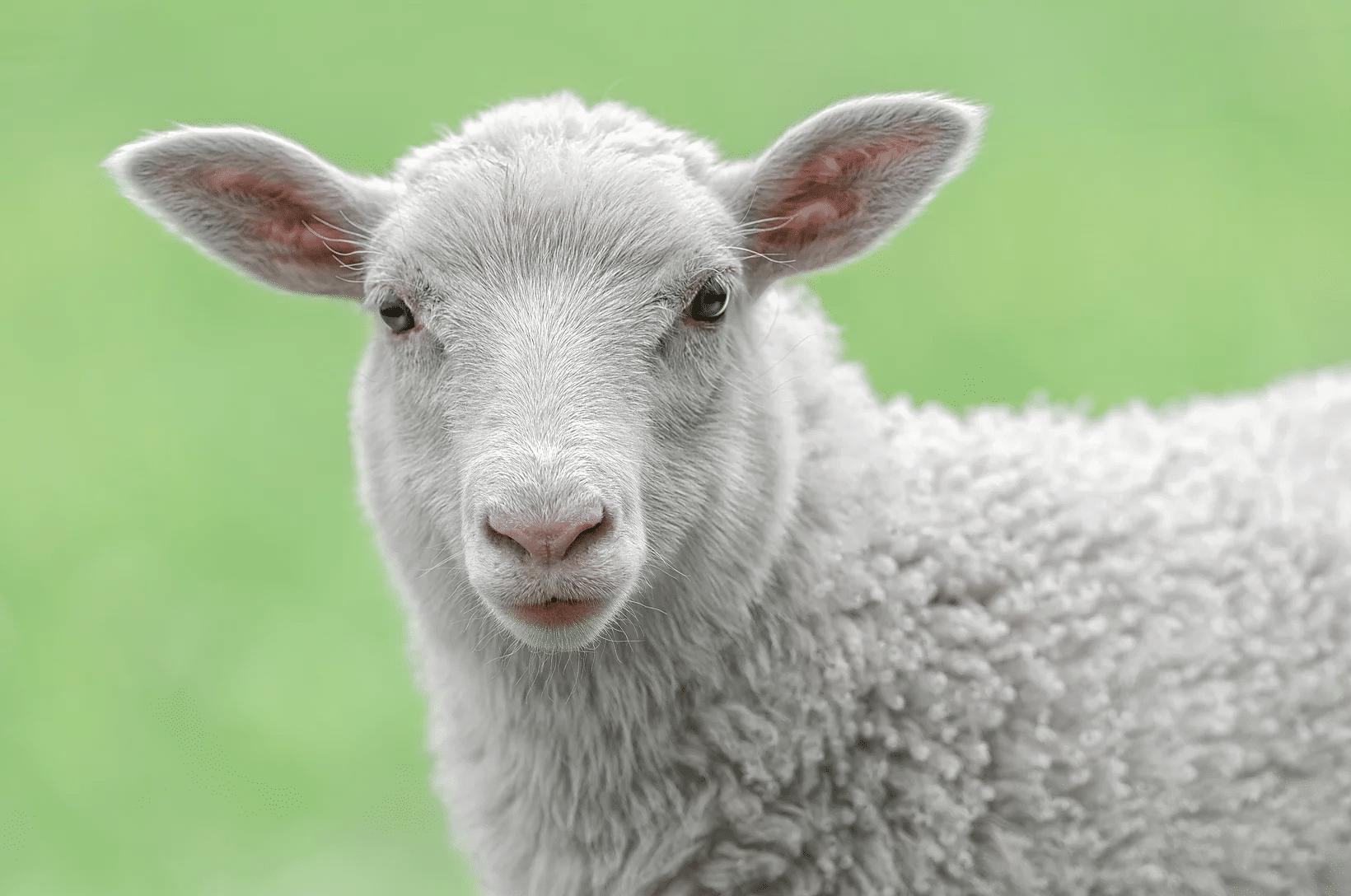 wunderbar humane choice australian lamb paleo foundation