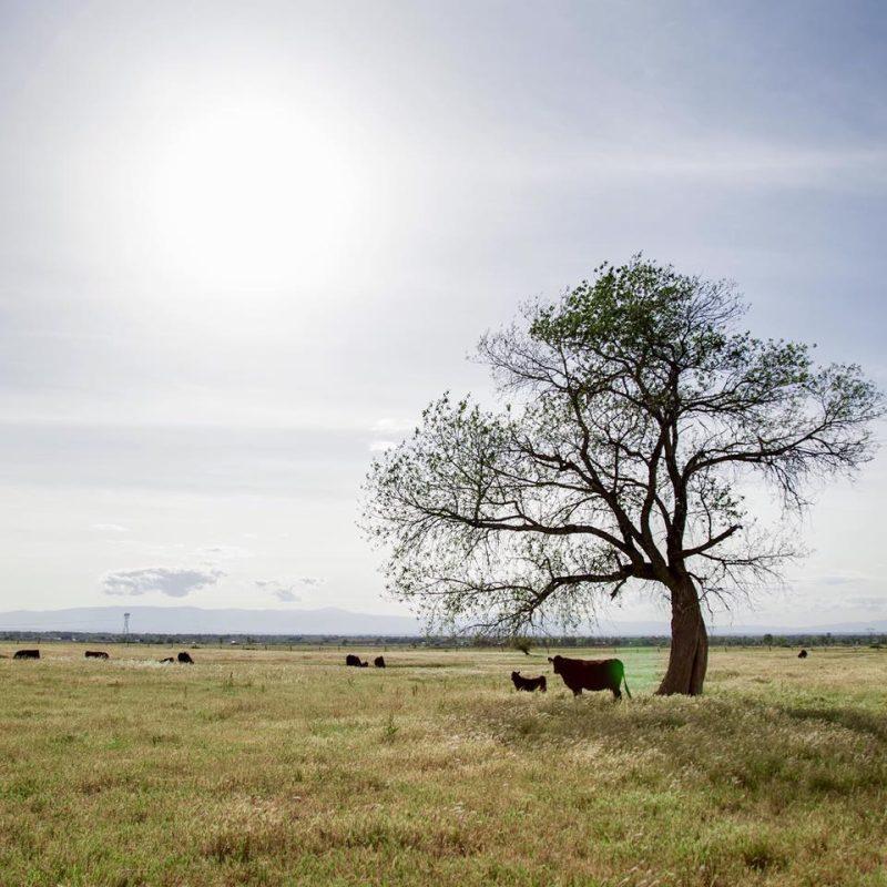 SunFed Ranch #paleoapproved