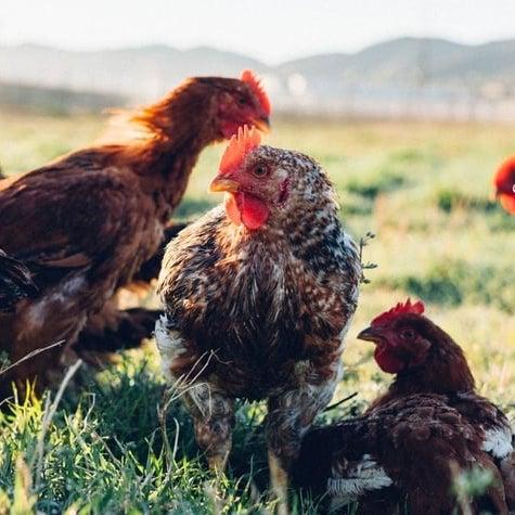 Chicken - Pasturebird - Paleo Approved - Paleo Foundation 2