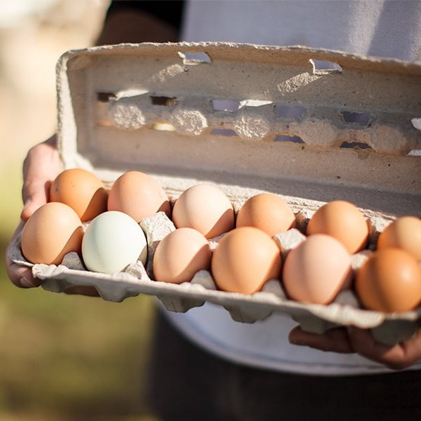 Primal Pastures Eggs - Paleo Approved by the Paleo Foundation