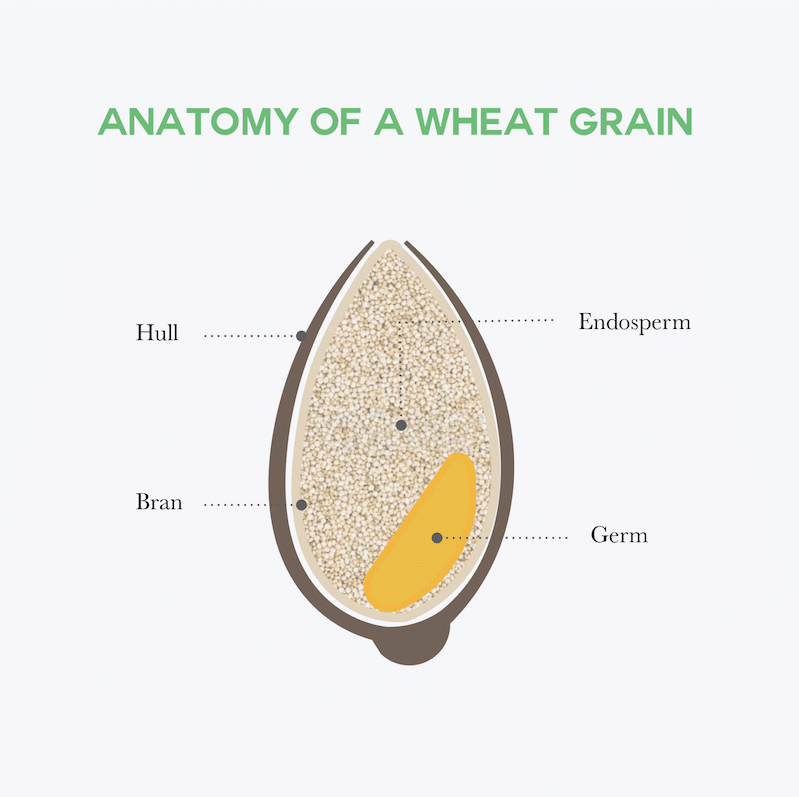 What is gluten and where is it located in the grain?