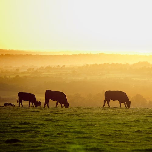 Sunset Grazing - Pasture Perfect 100% Free-Ranging Grass-Fed Beef - Certified Paleo, Keto Certified - Paleo Foundation