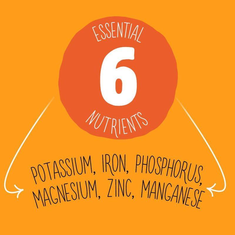 Essential 6 nutrients - Skuta Pumpkin Co. - Certified Paleo