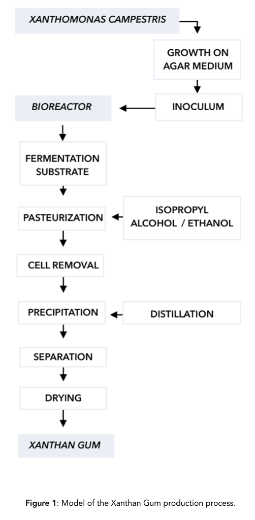 Xanthan Gum Production Process