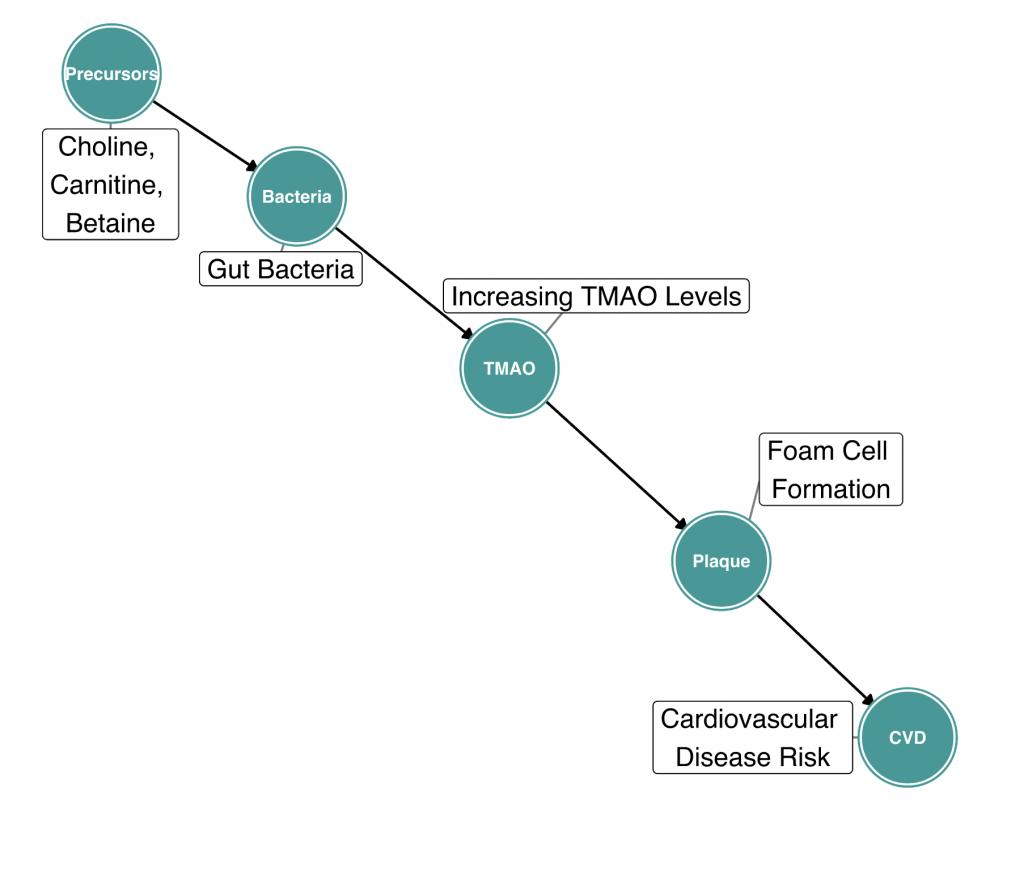 DIAGRAM 2: TMAO and Cardiovascular Disease, a Causal Diagram