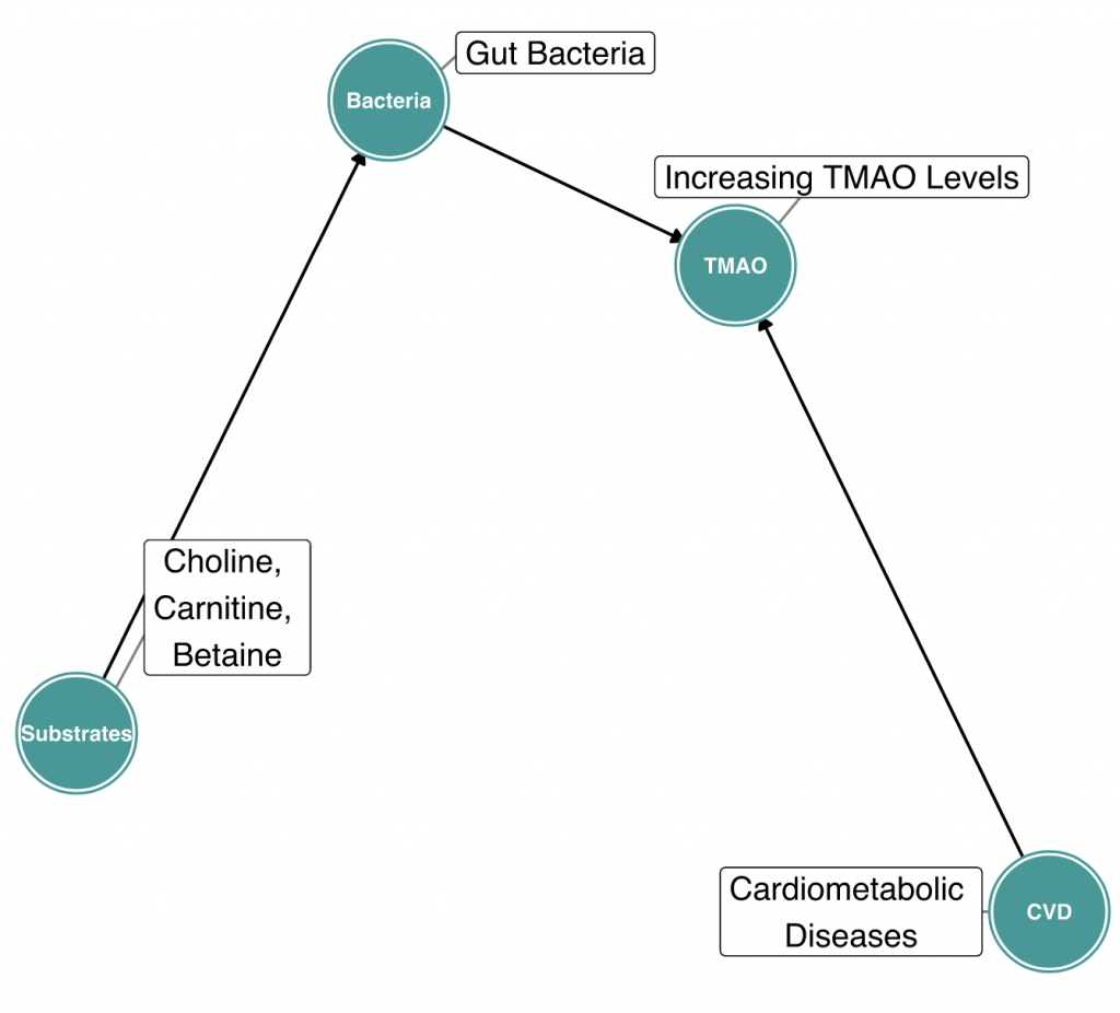 DIAGRAM 6:Causal effects of cardiometabolic diseases on gut-dependent metabolites