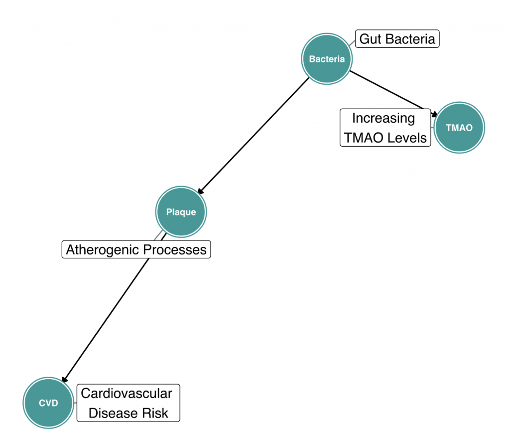 DIAGRAM 3: Microbial Contribution to TMAO Production and Cardiovascular Disease, a Causal Diagram